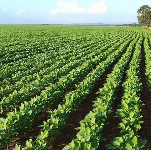 Fazenda Modelo em Palmas-TO [ Agricultura ]