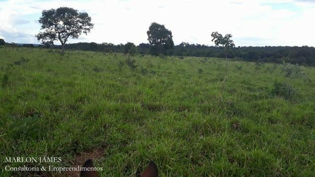 Fazenda próximo a Aragarças e 30 km de Ponte Alta para gado e lazer! - Foto 13