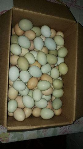 Ovos de capoeira na barra dos coqueiros  - Foto 2