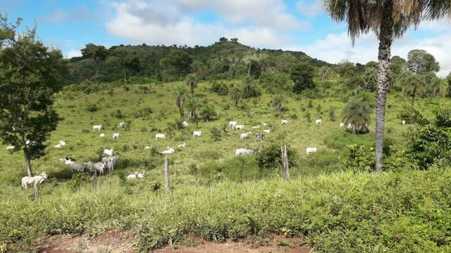 Fazenda com 561 há (116 alq) maior valorização pecuarista próximo a capital - Foto 9