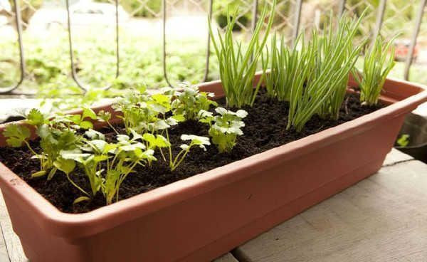 Cultive uma vida mais saudável hoje mesmo! - Foto 3