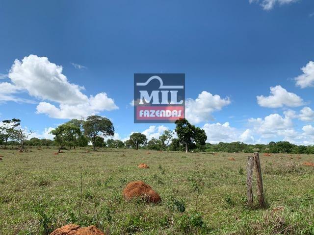 Fazenda 43 Alqueires ( 208 hectares ) Bonfinópolis-GO - Foto 7
