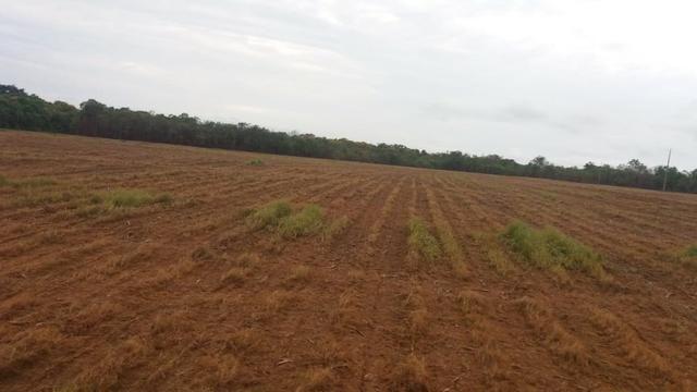 Fazenda Modelo em Palmas-TO [ Agricultura ] - Foto 3