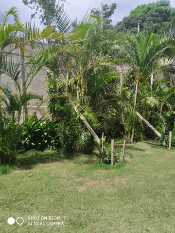 Cerimonial Garden Goddio - Foto 11