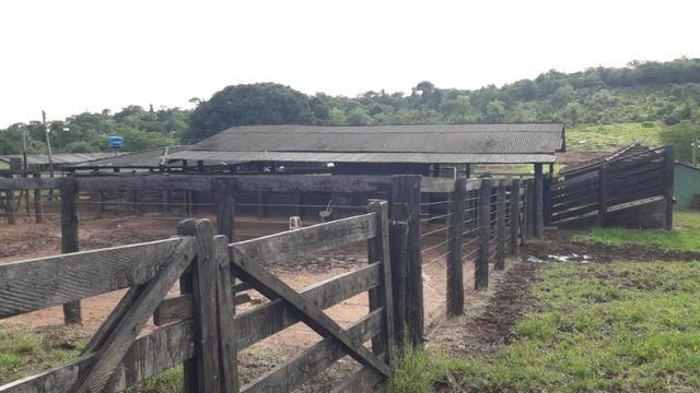 Fazenda com 561 há (116 alq) maior valorização pecuarista próximo a capital - Foto 5