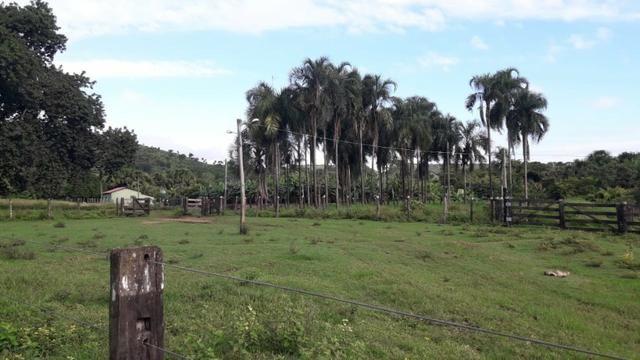 Fazenda com 561 há (116 alq) maior valorização pecuarista próximo a capital - Foto 7
