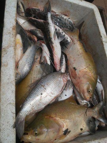 Chegou peixe - Foto 2