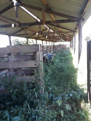 Fazenda 80 Alqueires município campina verde - Foto 5