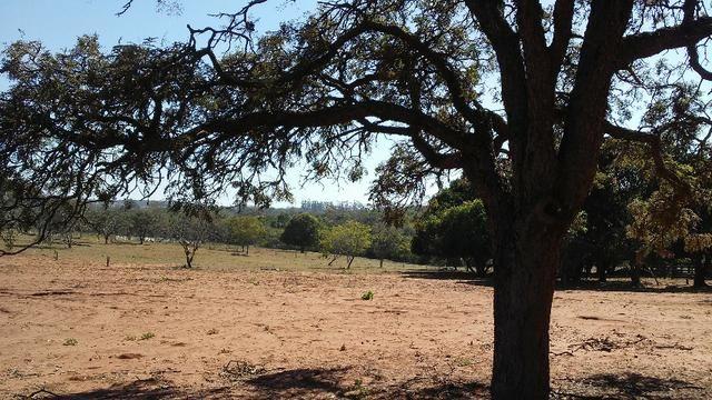 Chácara 14 km de Campo Grande - 9,8 hectares - Foto 6
