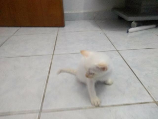 Gatos para doação (presido doar urgente)