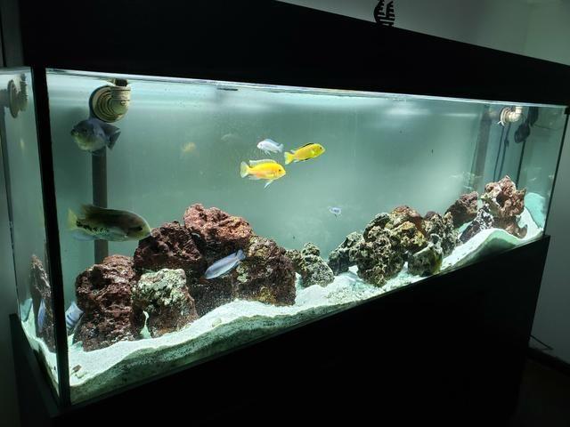 Aquário jumbo com 2 metros - Foto 4