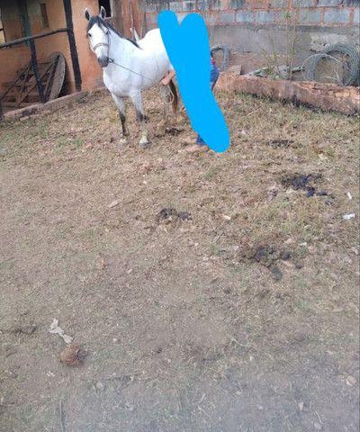 Cavalo - Foto 2