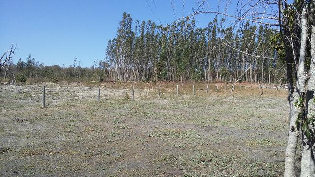 Chácara 14 km de Campo Grande - 9,8 hectares - Foto 14