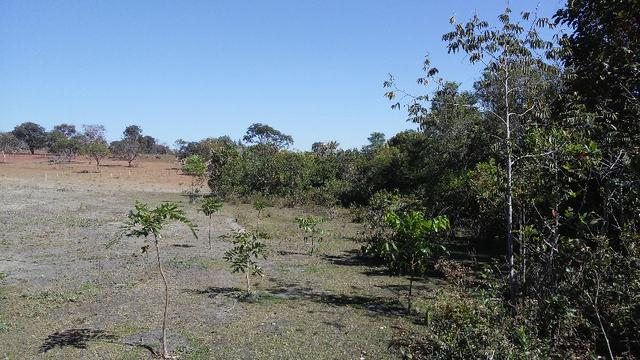 Chácara 14 km de Campo Grande - 9,8 hectares - Foto 13