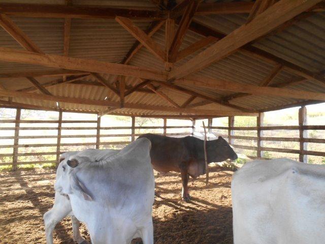 Fazenda 172 tarefas de terra com sede para criaçao de gado e cavalo e plantaçao - Foto 10