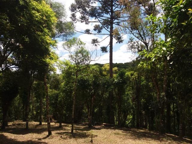 Terreno em Avenquiha - Campo Alegre, 30.000 m.² - Foto 10