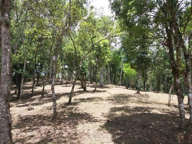 Terreno em Avenquiha - Campo Alegre, 30.000 m.² - Foto 14