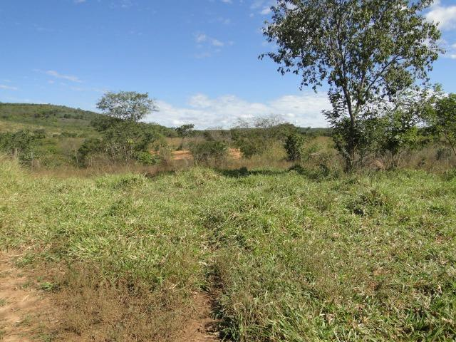 Fazenda 157 hectares na beira do rio Parauna - Foto 7