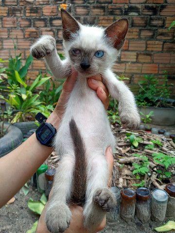 Doação de Filhotes de Gatos  - Foto 3
