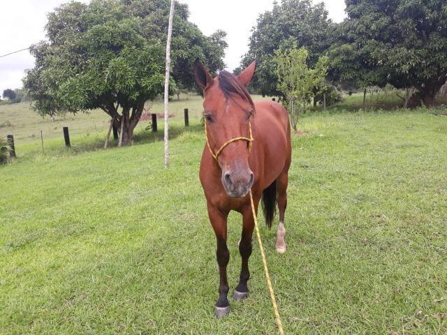Vendo Cavalo picado (pra vender)