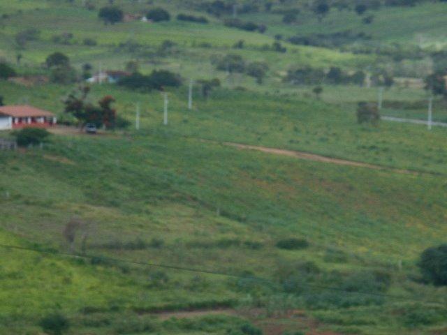 Fazenda 172 tarefas de terra com sede para criaçao de gado e cavalo e plantaçao - Foto 5