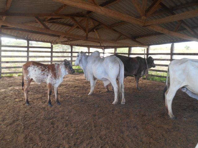 Fazenda 172 tarefas de terra com sede para criaçao de gado e cavalo e plantaçao - Foto 12