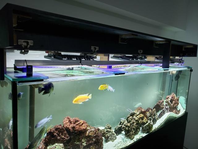 Aquário jumbo com 2 metros - Foto 3