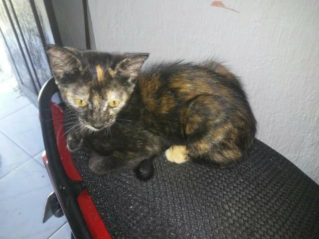 Gato para adoção - Foto 4