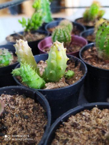 Plantas  - Foto 4