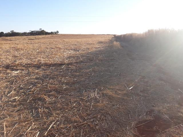 Fazenda de 28 alqueires ( 135 hectares ) Paraúna-GO ( soja ) - Foto 7