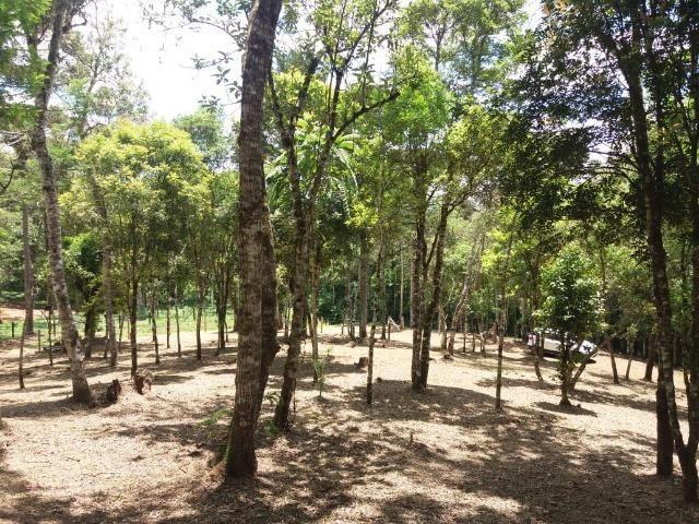 Terreno em Avenquiha - Campo Alegre, 30.000 m.² - Foto 5