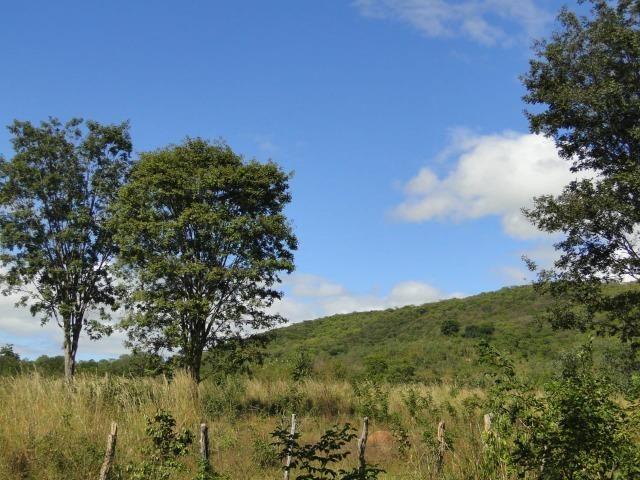Fazenda 157 hectares na beira do rio Parauna - Foto 5