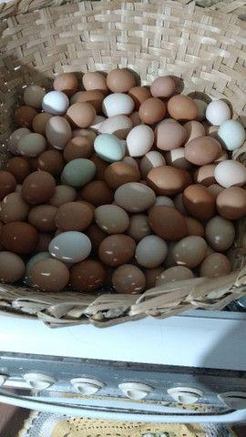 Vendo ovos de galinha caipira - Foto 4