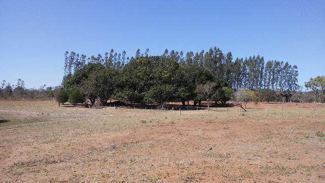 Chácara 14 km de Campo Grande - 9,8 hectares - Foto 19