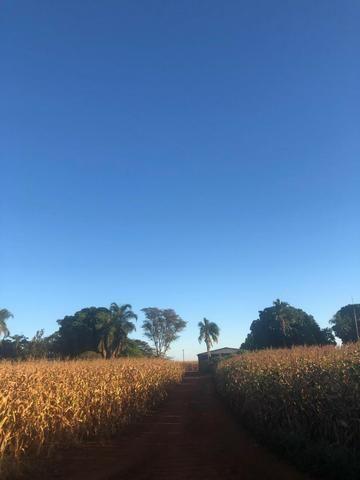 [Fazenda Top em Lavoura] 33,5 Alq. Inaciolândia-GO - Foto 8