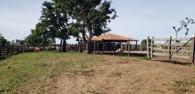 Fazenda a venda no extremo sul da bahia 170 ha - Foto 14