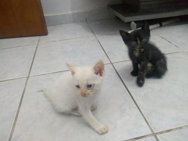 Gatos para doação (presido doar urgente) - Foto 2