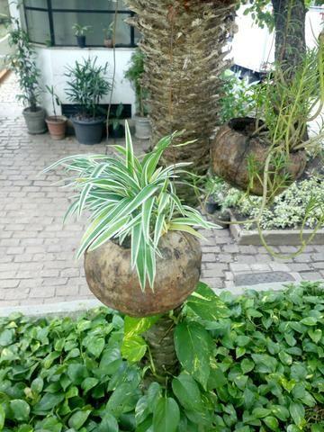 jardinagem - Foto 2