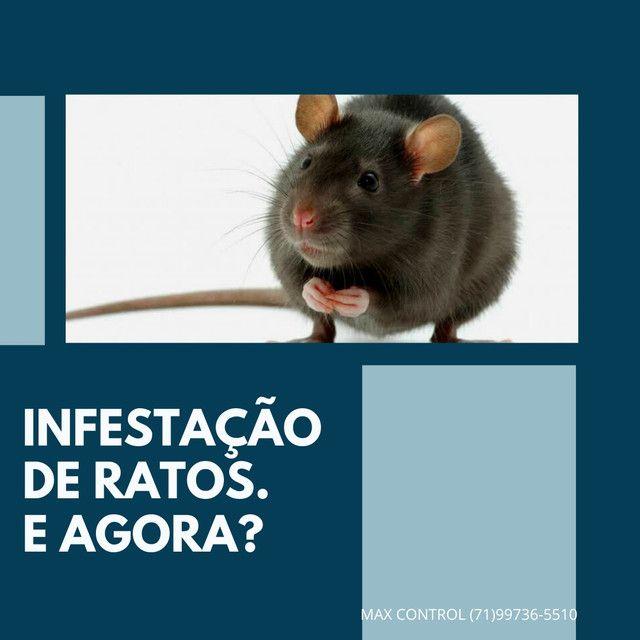 Infestação de ratos e baratas. E agora?