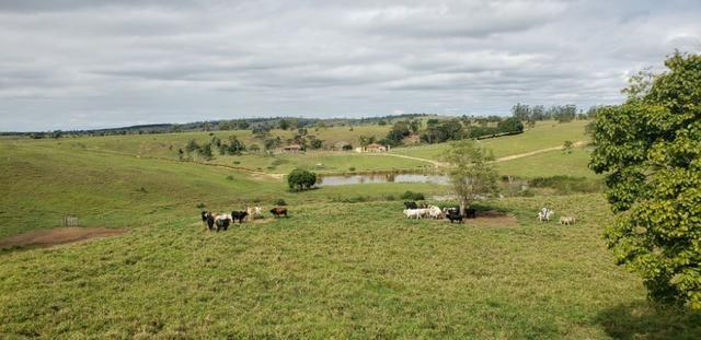 Fazenda a venda no extremo sul da bahia 170 ha - Foto 9