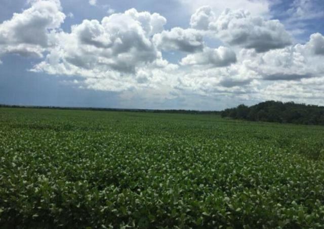 Vendo excelentes Fazendas de sojas em Tocantins