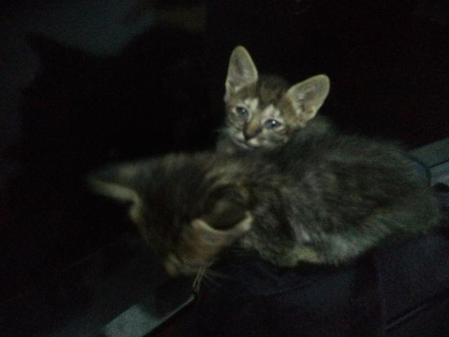 Gatos para doação (presido doar urgente) - Foto 3