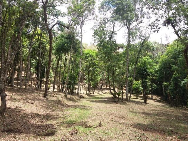 Terreno em Avenquiha - Campo Alegre, 30.000 m.² - Foto 11
