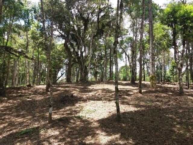 Terreno em Avenquiha - Campo Alegre, 30.000 m.² - Foto 15