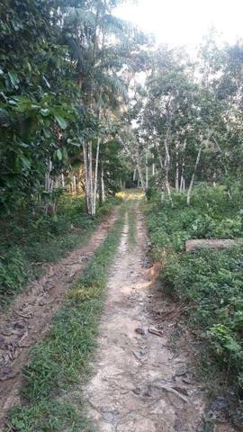 Terreno com vários igarapé em tefé-am área 500x500 - Foto 5