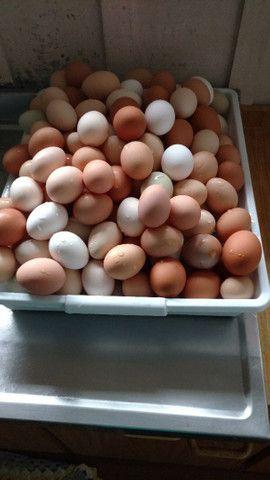Vendo ovos de galinha caipira - Foto 5
