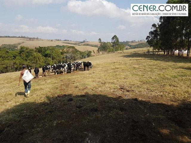 1876/Extraordinária fazenda de 160 para agricultura e pecuária - Foto 8