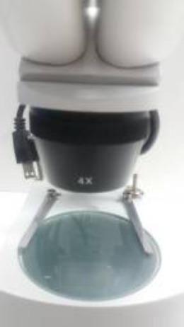 Microscópio estereo - Foto 4