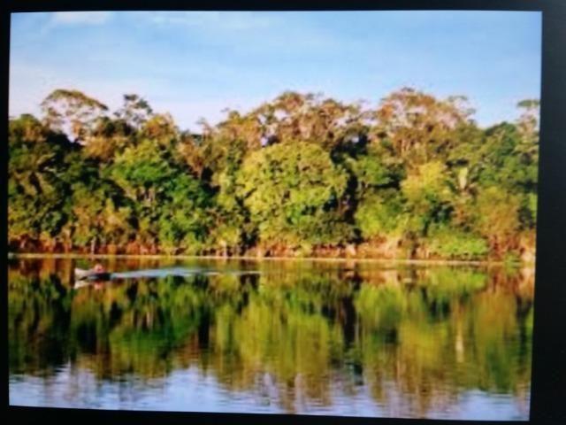 Área de 122.000 hectares na amazônia - Foto 8