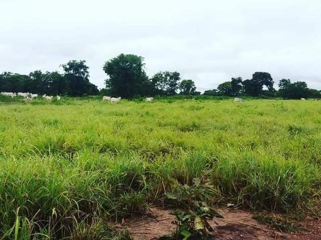 Fazenda em livramento 514 hectares - Foto 6
